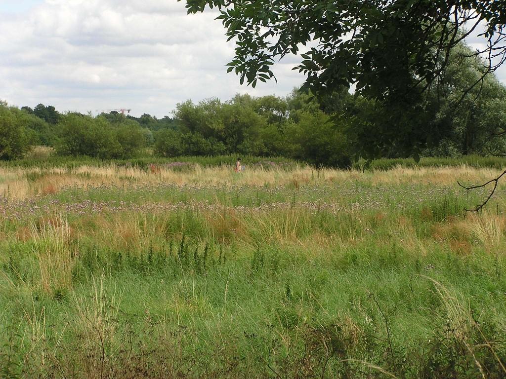 The fens outside of Cambridge