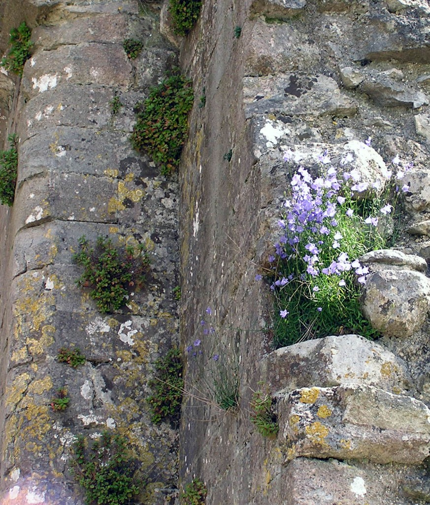 Detail of walls, Corfe Castle